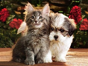Kitten-and-Puppy-sale-5