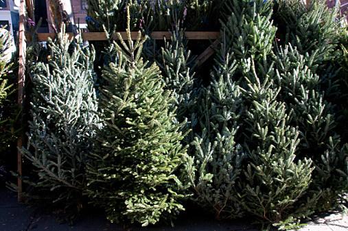 shreveport christmas tree shopping
