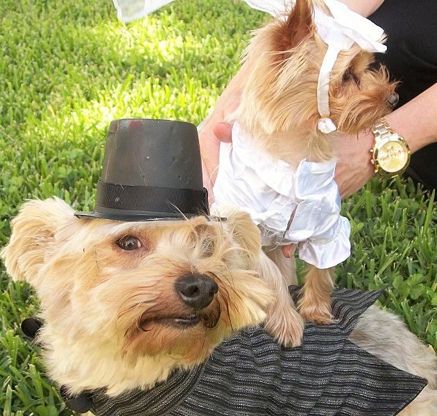 Baxter Harper wedding pic