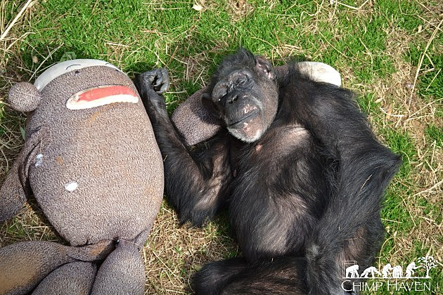 """photo of Grandma enjoying a nap with one of her """"babies"""""""