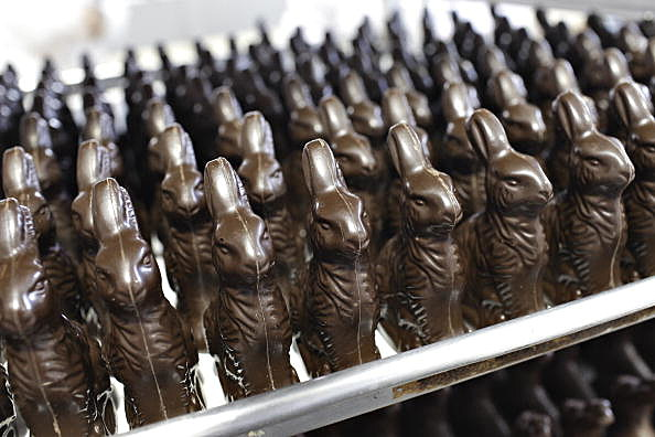 Trays of chocolate rabbits