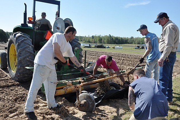 photo of Bossier Parish inmates planting vegetables