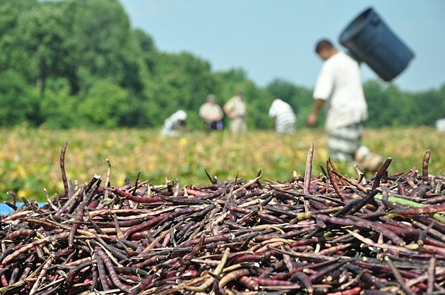 photo of Bossier Parish inmates harvesting vegies and some of their bounty